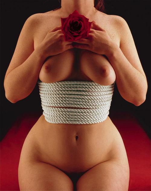 rosebreast.jpg
