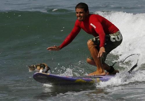 surfing_cat_6.jpg